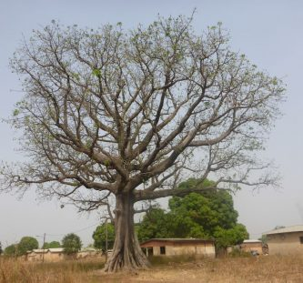 Ivory Coast Album