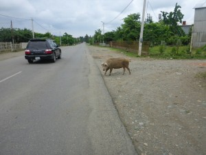 Beaucoup d'Animaux sur la route | Lot of animals on the road